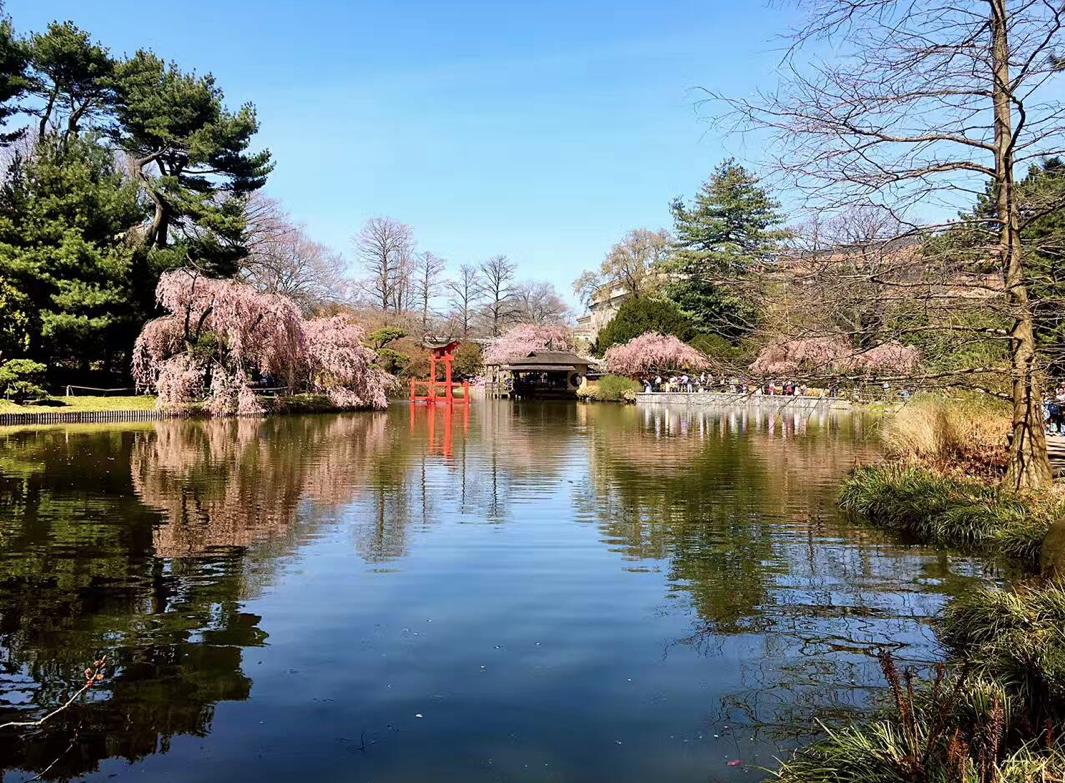 《镜花水天》 布鲁克林的樱花公园