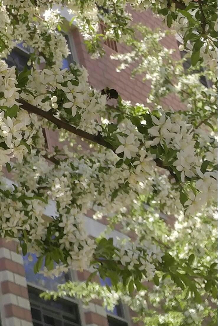 《 春 暖 花 开 》