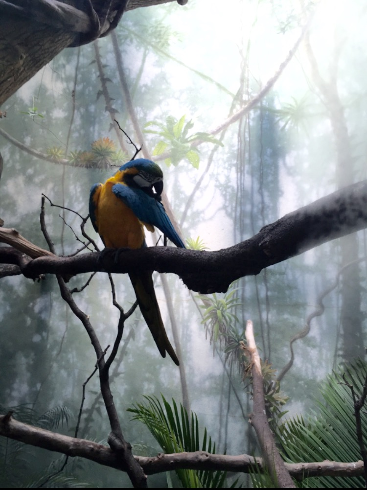 《 美 丽 的 鹦 鹉 》