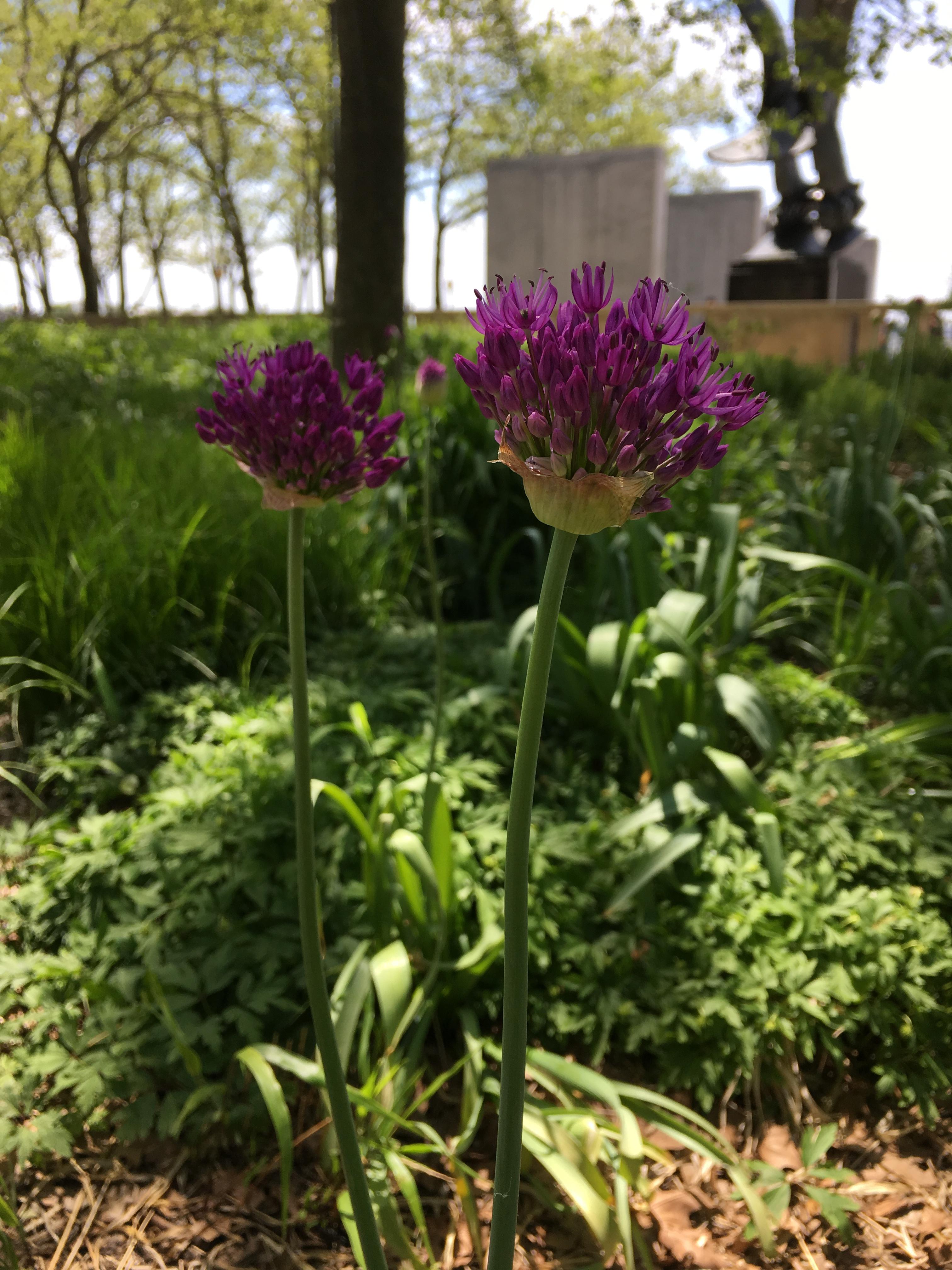 《 花 花 世 界 》